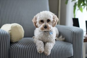 Pet relocation services in NYC