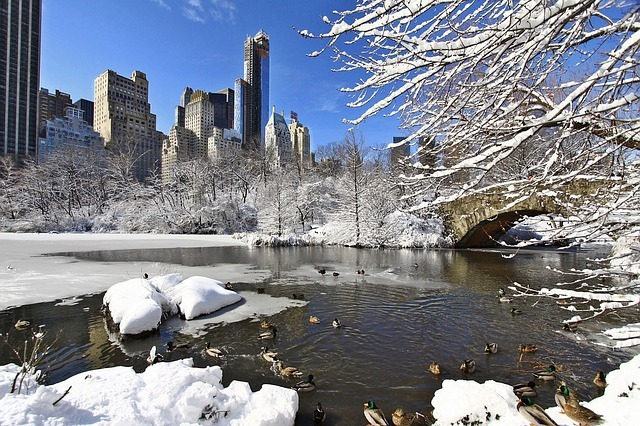 Reasons to avoid winter moving. Captured Central park covered in snow.