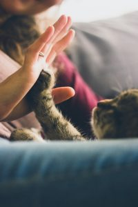 a cat touching woman's hand