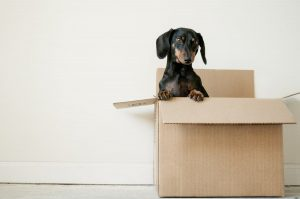 Puppy in a box ready to plan your NYC move on time