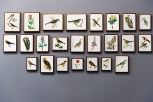 hire professionals for moving your art collection of birds