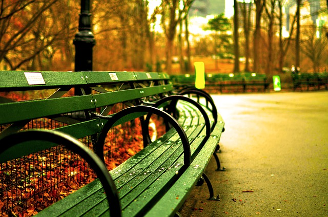A bench in Central Park and one of the best fall walks in NYC