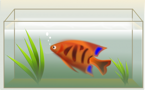 -pack and move a fish tank