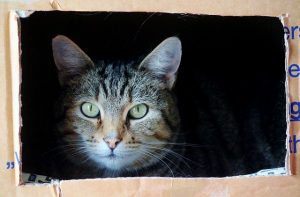 -a cat in the box
