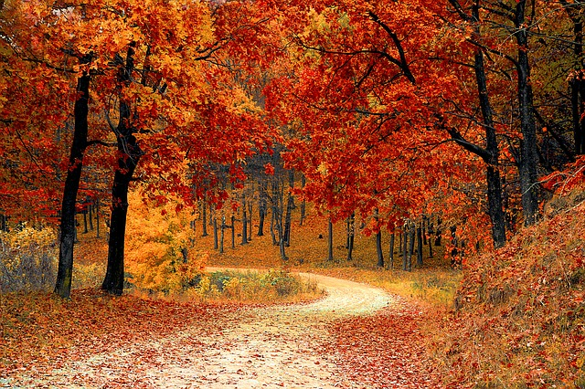 Tips for a Smooth Autumn Relocation