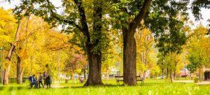 image of a park